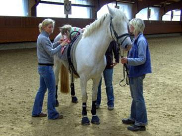 pferd über den rücken reiten